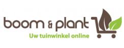 Boomenplant